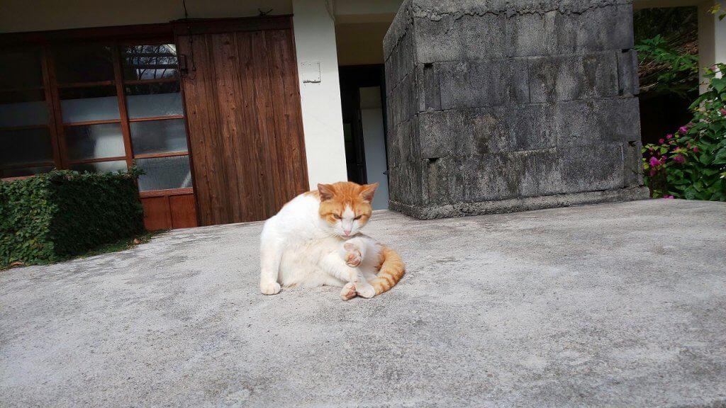 ヒムベーレ猫